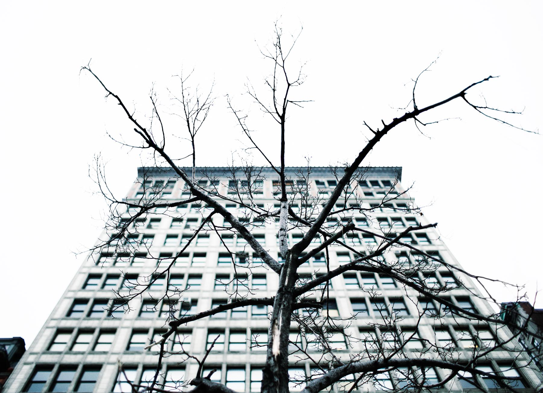 Building and Tree, Union Sq. NYC