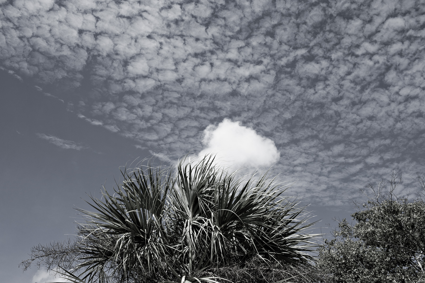 Clouds, Orlando Florida